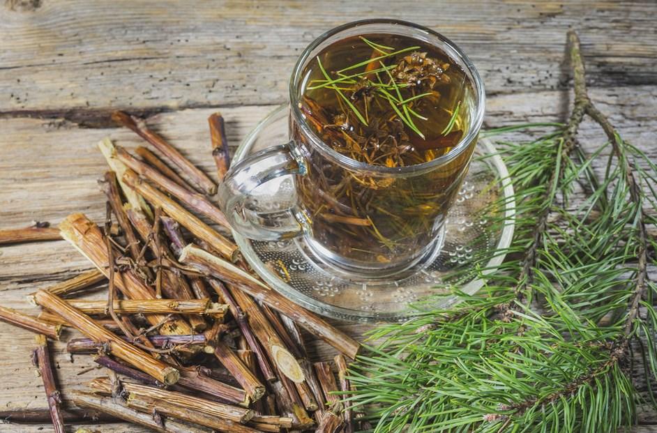 Сосновые почки чай